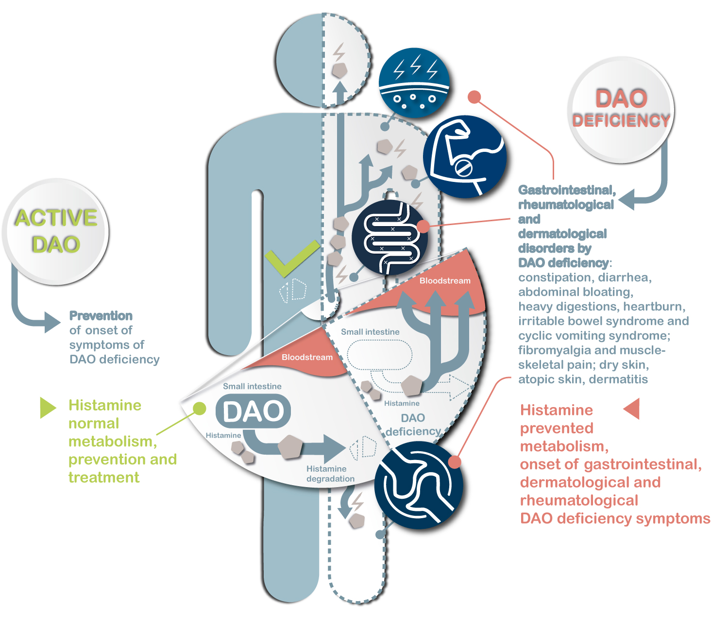 DAO-Food-en-infographic-DAO-deficiency-gastrointestinal-cutaneous-rheumatological-symptoms