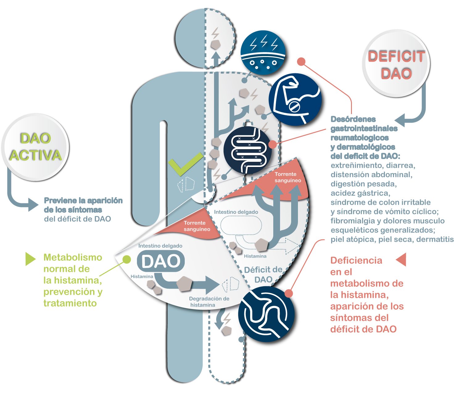 DAO-Food-es-infográfico-déficit-de-DAO,-síntomas-gastrointestinales-cutáneos-reumatologicos