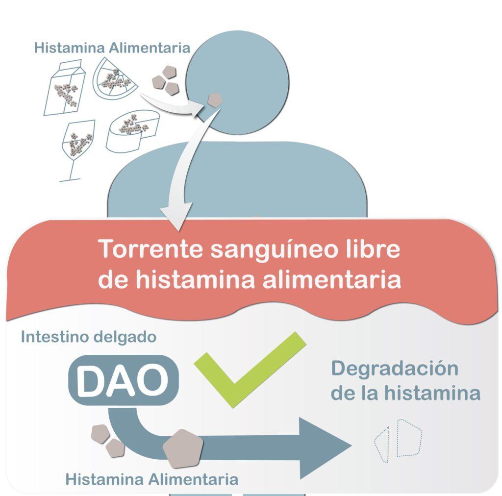 migrasin, dao, diamino oxidasa, enzima, migraña, cefalea, tinnitus, acufenos, déficit de DAO, histamina