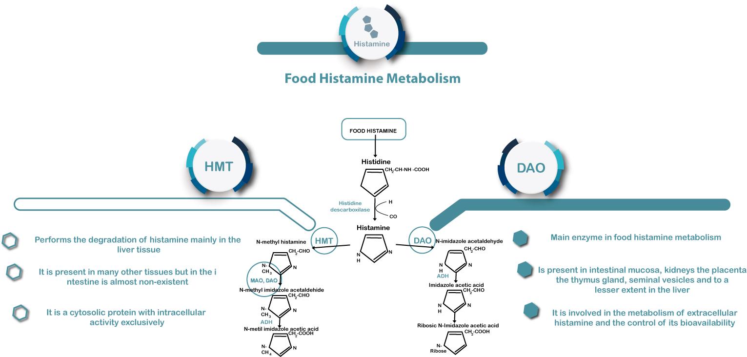 33d8c841c1511 Histamine in food – DR Healthcare - Innovating in DAO deficiency ...