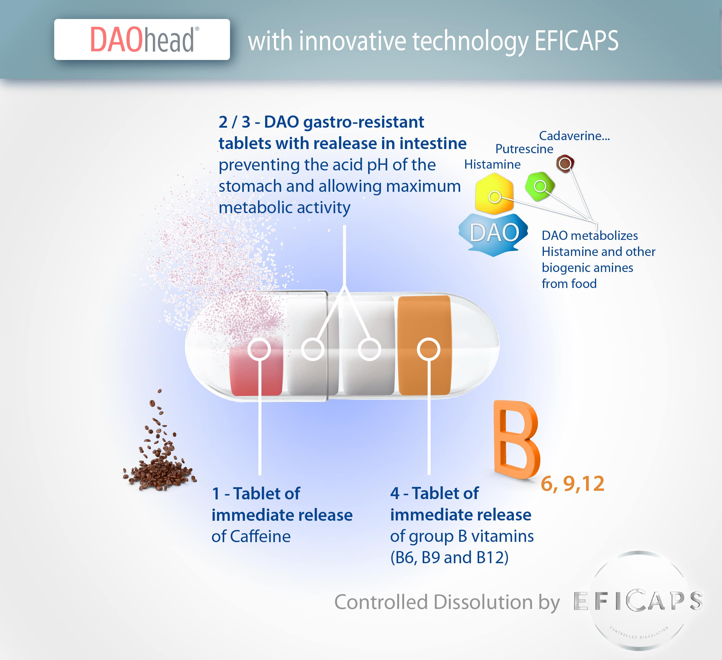 3.-Eficaps-DAOhead