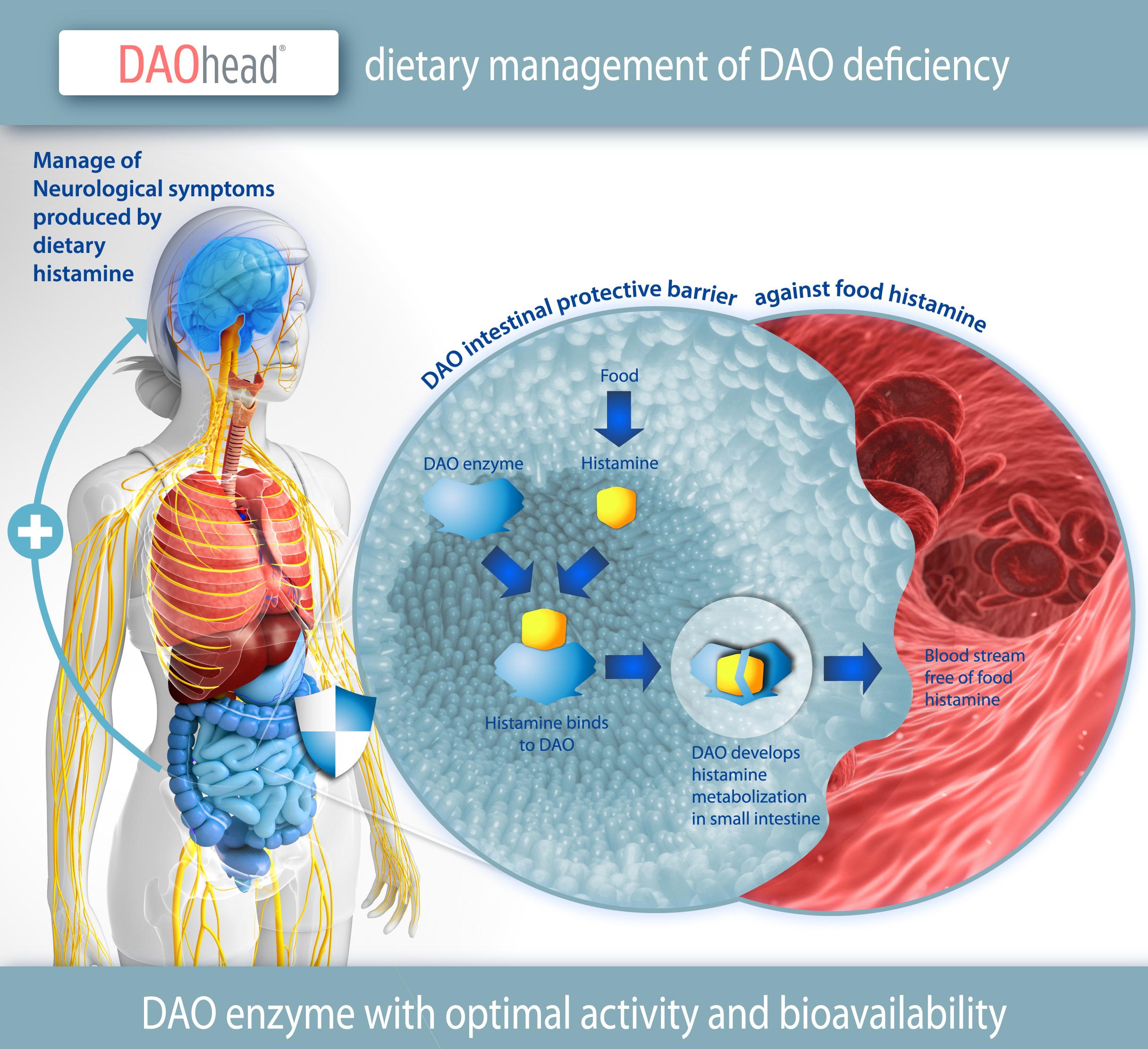 4--DAO-intestinal-barrier-DAOhead-2